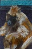 Baboon by Erica Shipley, Painting, Pastel