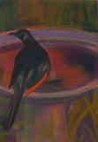 Bird Bath (Redwing Starling I) by Erica Shipley, Painting, Pastel