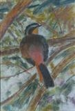 Cape Robin by Erica Shipley, Painting, Pastel