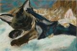 New Tom by Erica Shipley, Painting, Pastel