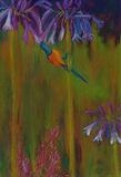 Sunbird with Agapanthus by Erica Shipley, Painting, Pastel